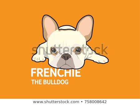 angry or mad french bulldog Stock photo © feedough