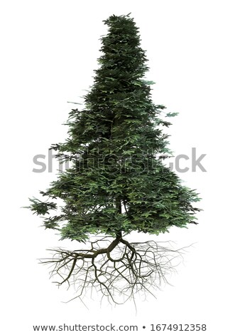 Tree with roots in the beautiful fir forest Stock photo © Kotenko