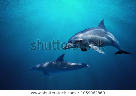Amazing Underwater Marine Life Stock photo © bluering