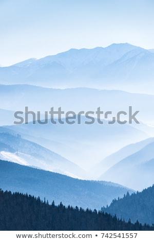 林間の空き地 · スプルース · 木材 · ツリー · 草 · 自然 - ストックフォト © wildman