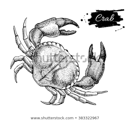 Monochrome Hand Drawn Seafood Illustration Poster Stock photo © robuart