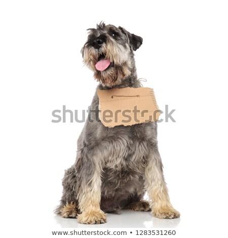 собака · совета · белый · фон · черный - Сток-фото © feedough
