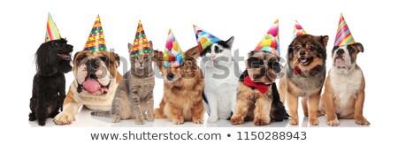 gruppo · molti · divertente · animali · indossare · compleanno - foto d'archivio © feedough