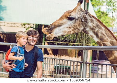 father and son watching and feeding giraffe in zoo happy kid having fun with animals safari park on stock photo © galitskaya