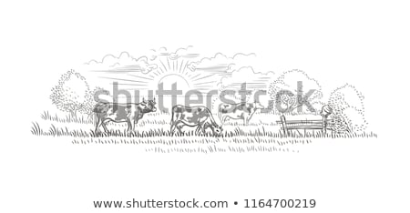 Silhueta cena vacas fazenda ilustração pôr do sol Foto stock © colematt