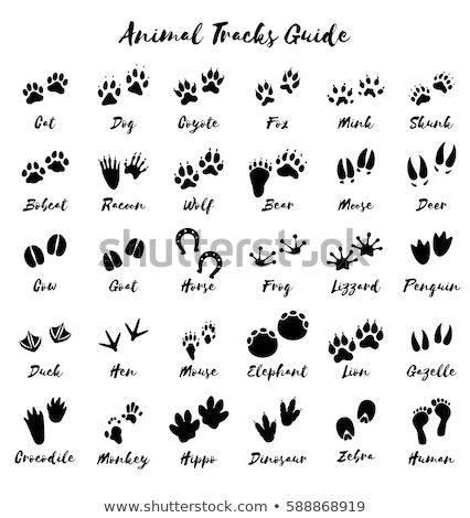 Voetafdrukken wilde dieren bos illustratie beer dier Stockfoto © adrenalina