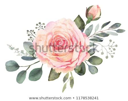 Exuberante rosa rosas rústico flores Foto stock © BarbaraNeveu
