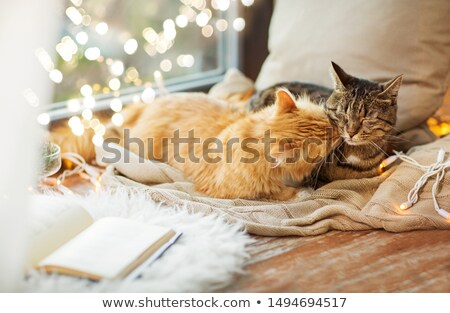 cats lying on windowsill with blanket at christmas Stock photo © dolgachov