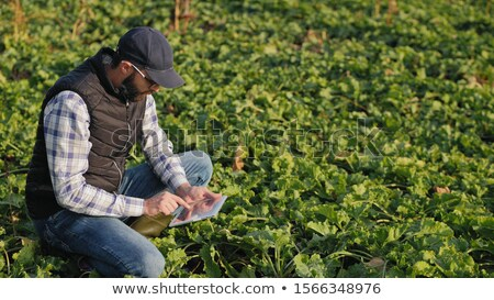 Farmer and sugar beet root harvesting in field, agricultural con Stock photo © simazoran
