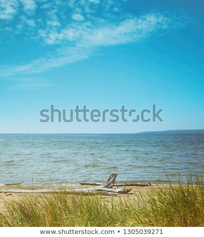 Sabbia driftwood lago natura mare sfondo Foto d'archivio © Sandralise