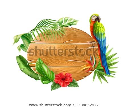 dzsungel · madár · fa · felirat · illusztráció · víz - stock fotó © colematt