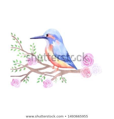 Kingfisher and pink roses on a tree branch Stock photo © shawlinmohd