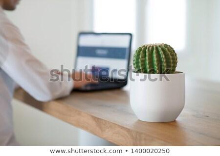 cacto · sofá · agulha · assento · interior · engraçado - foto stock © DamonAce
