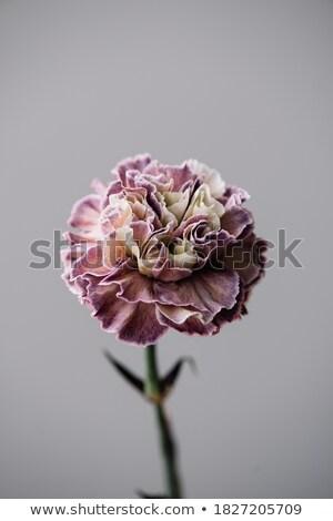 Bloem markt bloemen verkoop natuur tuin Stockfoto © saje