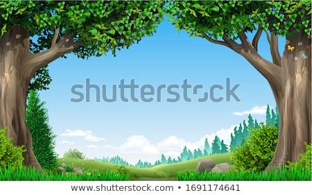 fairy tale forest in norway stock photo © gewoldi