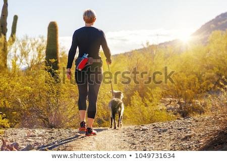 deserto · cão · silhueta · em · pé · pôr · do · sol - foto stock © ErickN