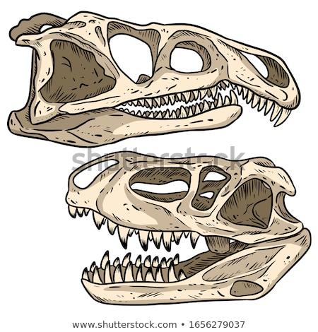 Dinosauro sud america tardi rendering 3d bianco 3D Foto d'archivio © AlienCat