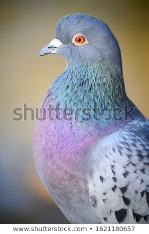 Dove in a Park Stock photo © rhamm