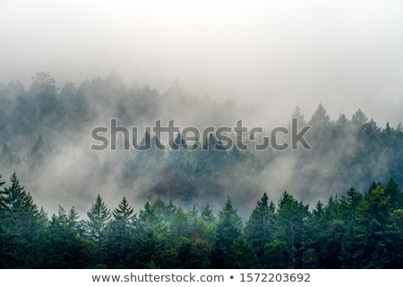 lake landscape with trees in fog Stock photo © Mikko