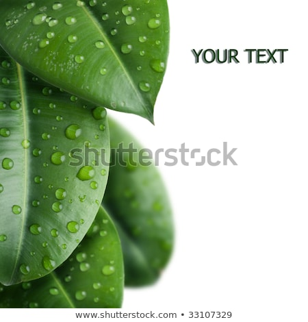 water drops on green stalk isolated on white with space for text stock photo © leonardi