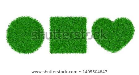 gras · hartvorm · geïsoleerd · witte · natuur · groene - stockfoto © zarost