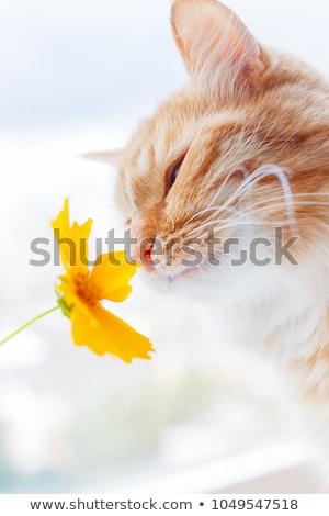 red cat smelling the flowers Stock photo © manera