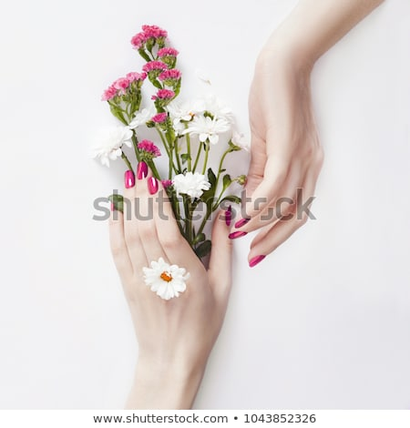Well-groomed female hands, isolated on white background Stock photo © Nobilior