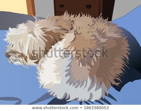 Cão belo bem leal sessão fora Foto stock © AlphaBaby