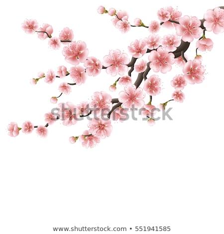 Stock fotó: Valósághű · sakura · Japán · cseresznye · ág · eps