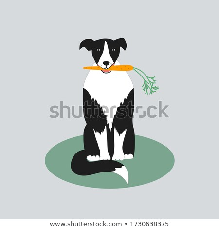 border collie vegan Stock photo © cynoclub