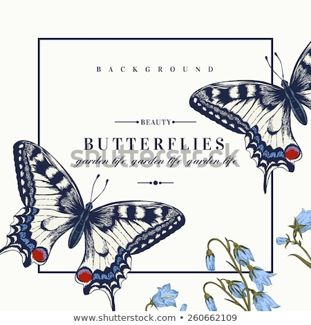 border template with butterflies in garden stock photo © bluering