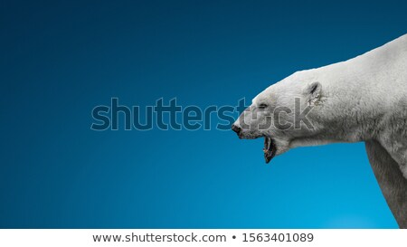 Male protecting face from violent attack Stock photo © stevanovicigor