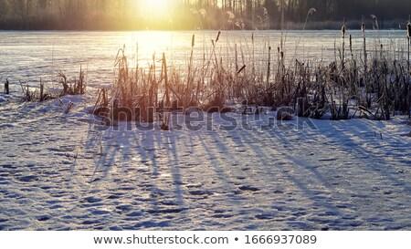 part · fagyott · tó · növények · fény · hó - stock fotó © Mps197