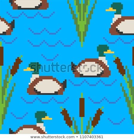 Drake pixel art pattern. Pond 8bit of texture. waterfowl bird ba Stock photo © MaryValery