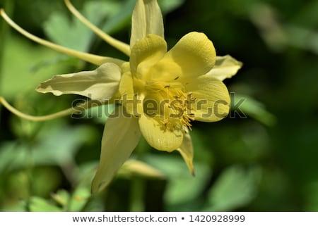 Полевые · цветы · Гранит · Невада · гор · желтый · Purple - Сток-фото © boggy