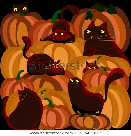 Astuto desenho animado gato preto bruxa ilustração seis Foto stock © cthoman
