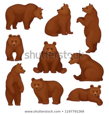 Cartoon orso bruno isolato bianco felice divertente Foto d'archivio © tigatelu
