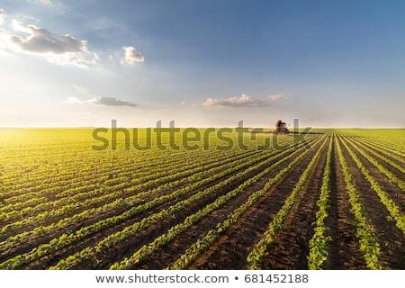 緑 栽培 大豆 フィールド 春 農業 ストックフォト © simazoran