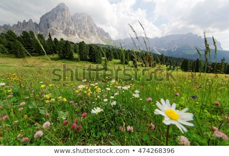 Summer hillside . Stock photo © Pietus
