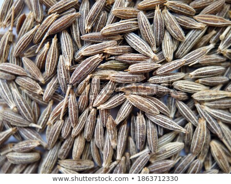 Spices: small pile of zeera seeds Stock photo © digitalr