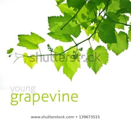 Verticaal shot druif blad groene Stockfoto © pixelsnap