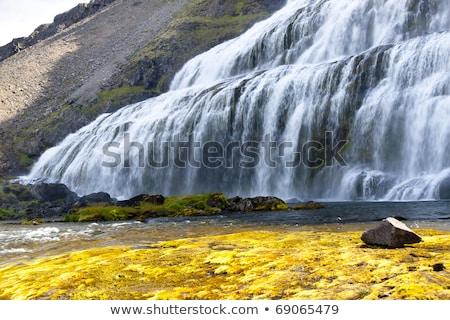 急速 川 滝 アイスランド 表示 草 ストックフォト © tomasz_parys