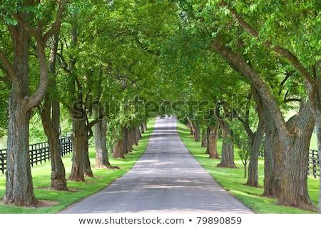 Ağaç yol boş bloklar arazi çim Stok fotoğraf © iTobi