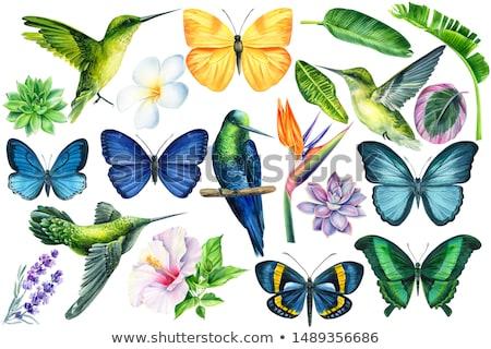 Kleurrijk tropische vlinder collectie poster natuur Stockfoto © krabata