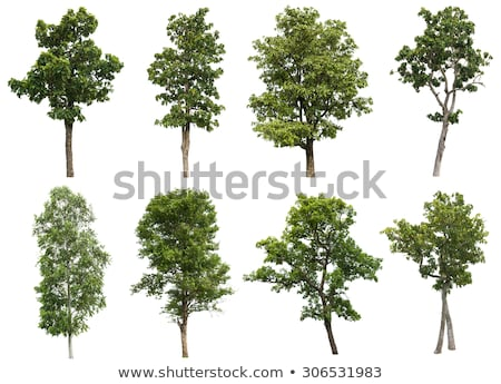 isolated deciduous tree on a white background Stock photo © Zerbor