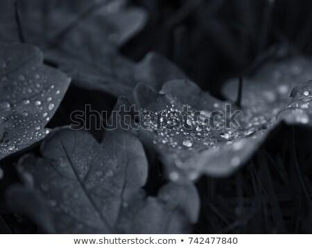 Drogen eiken blad gras bruin groene Stockfoto © sdenness