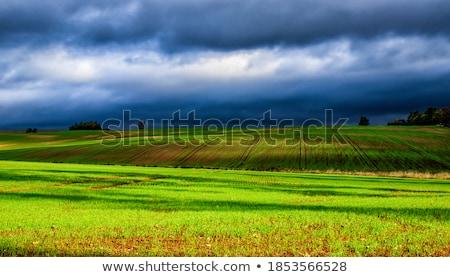 friss · fű · cseppek · harmat · fény · zöld - stock fotó © meinzahn