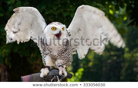 gufo · fuori · uccello · animale · terra · naturale - foto d'archivio © kayco