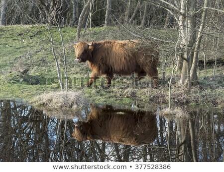 Szarvas víz Hollandia természet tájkép mező Stock fotó © compuinfoto
