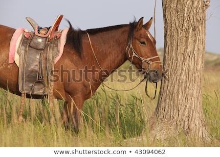A horse beside the tree Stock photo © bluering